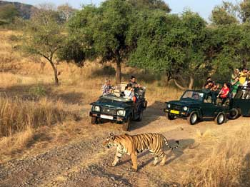 corbett jeep safari tour
